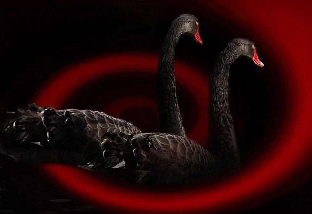 Black_Swan_Event-780x438
